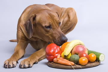 Fruits and Vegetables Your Dog Can Eat