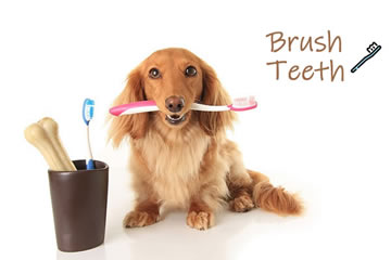How to Brush My Dog's Teeth: A Step by Step Tutorial and FAQs