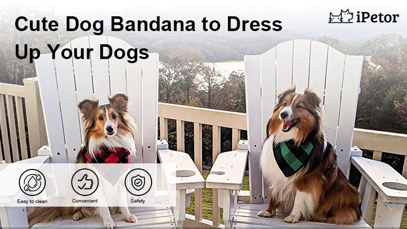 Cute Dog Bandana banner