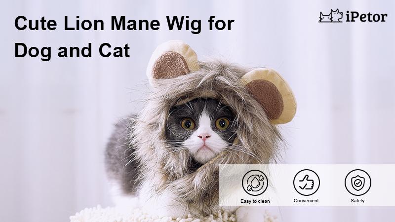 C67 cat wig accessories banner 1