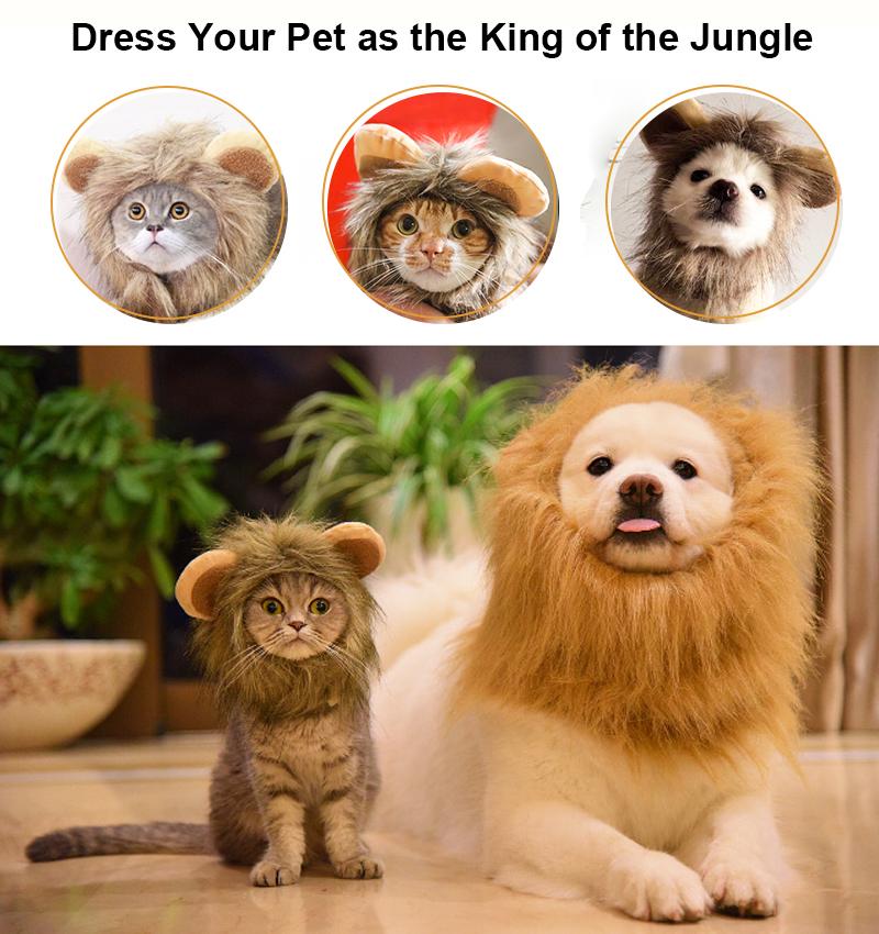 dress your pet