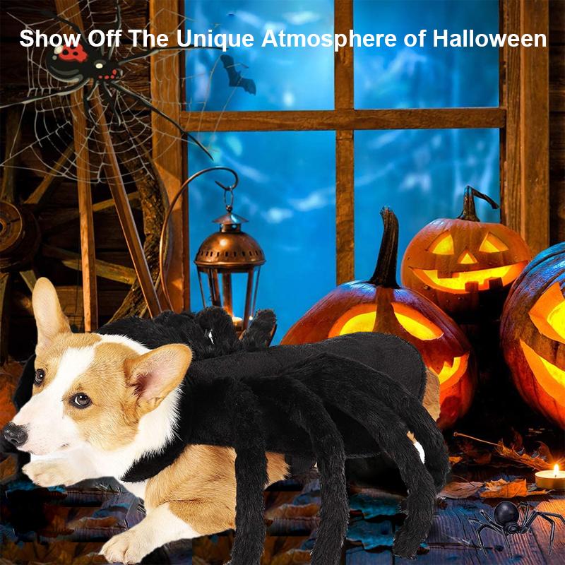 adorable pet halloween spider costume