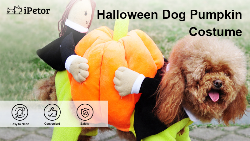 Halloween dog pumpkin costume banner