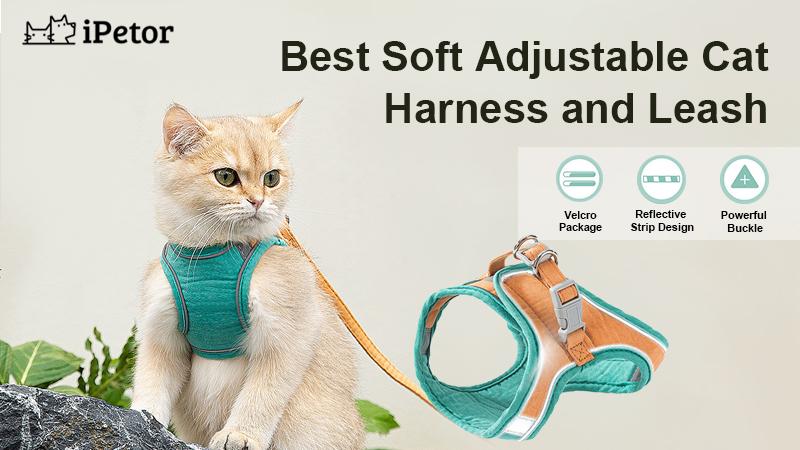 cat harness banner 1