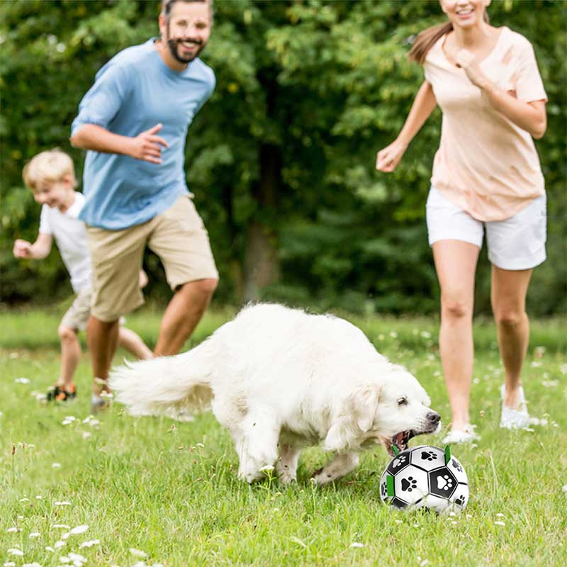 dogs chasing ball