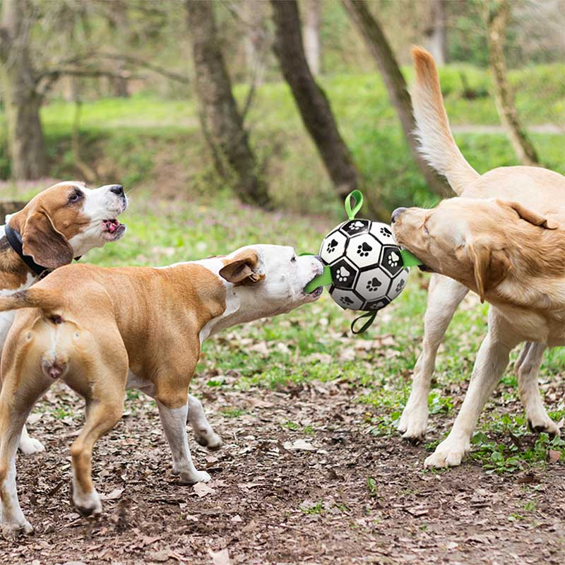 dog grabs and holds the toy ball