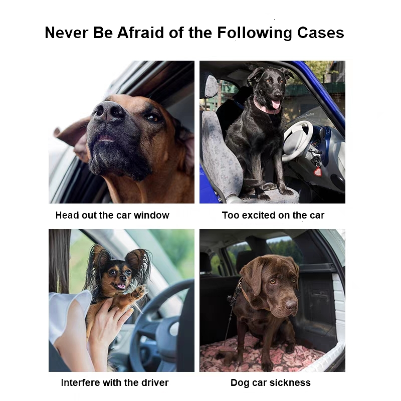 secure dog during driving a car