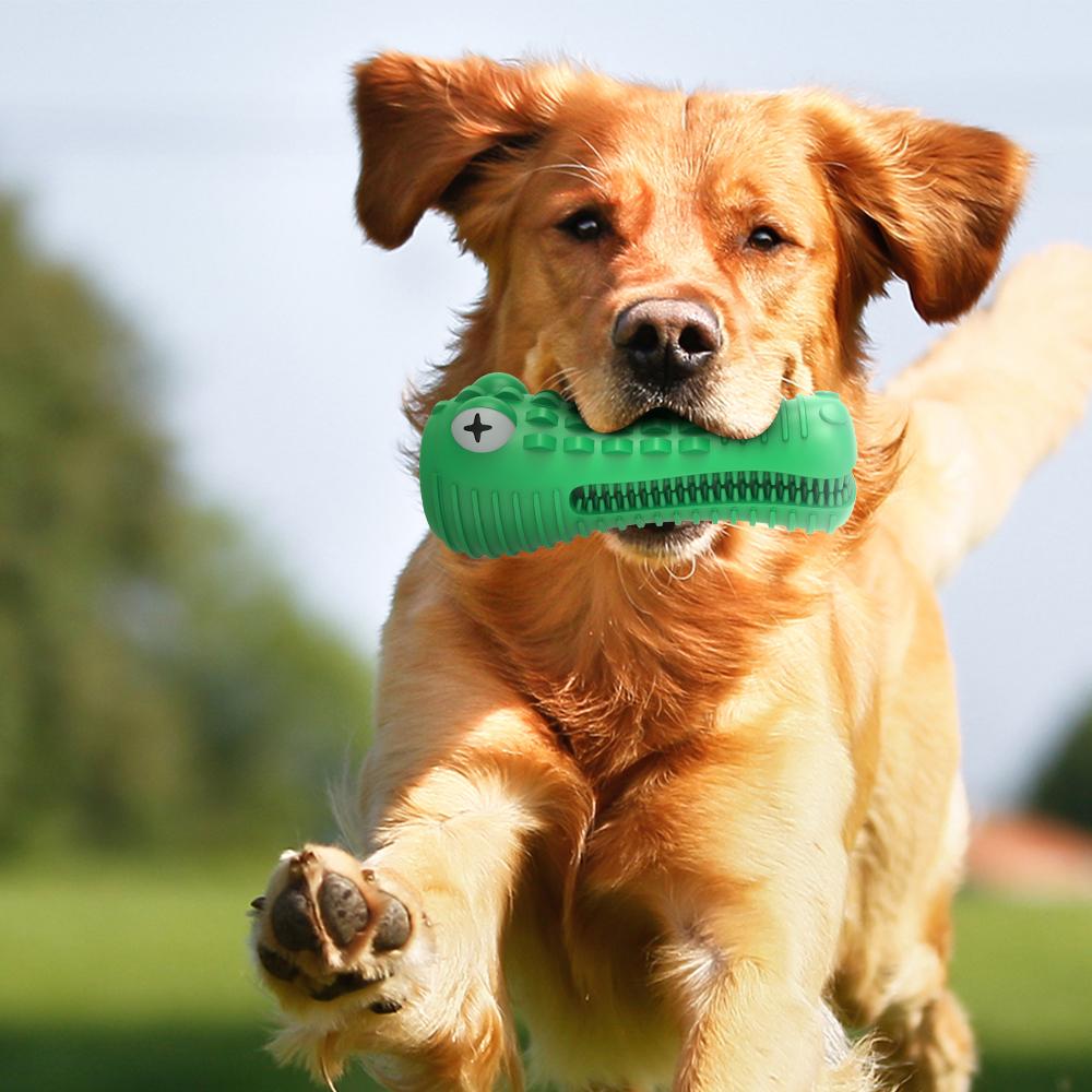 dog toy use scene1