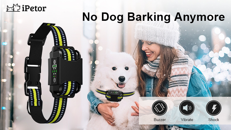 dog training collar banner 1