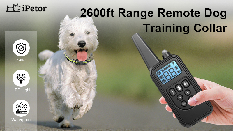 dog training colar banner