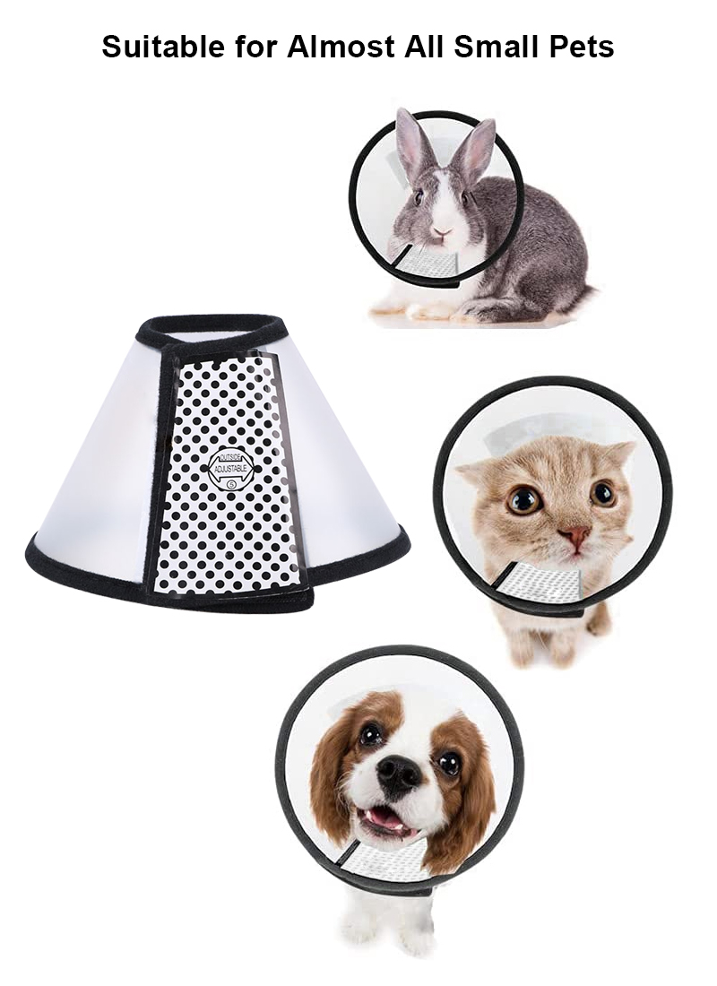 for puppies kittens rabbits dogs and cats