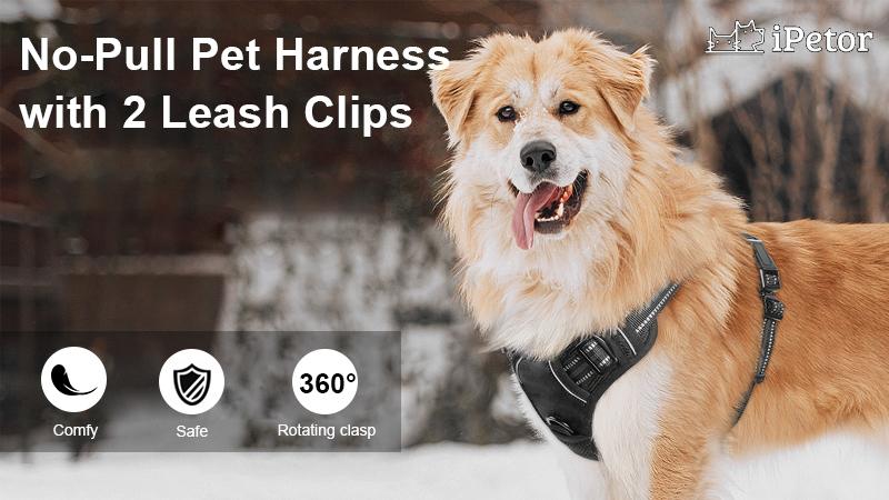 pet harness banner 1