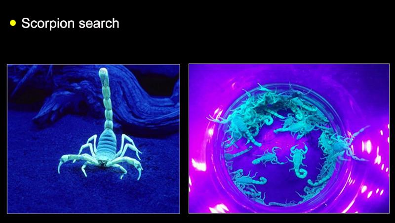 scorpion search
