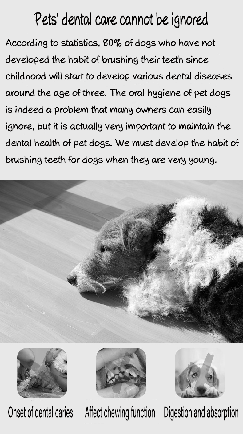 why pet need teeth cleaning